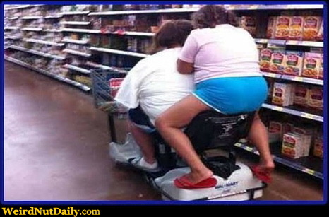 Funny Pictures Weirdnutdaily Grocery Ride