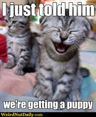 funny pictures weirdnutdaily   kitten running jokes