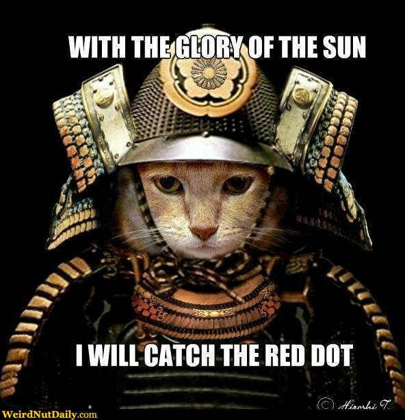 funny pictures weirdnutdaily   samurai cat