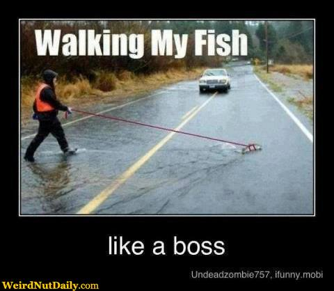 Funny pictures weirdnutdaily walking my fish for Fish on a leash