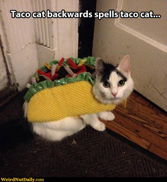 funny cat dressed up - photo #9