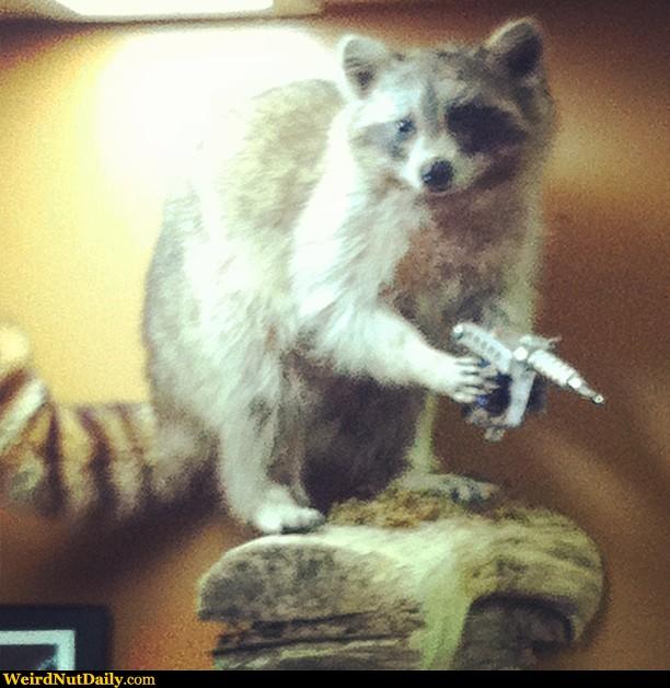 Funny Pictures @ WeirdNutDaily - The Raccoon Tattoo Artist