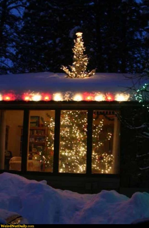 Funny Pictures @ WeirdNutDaily - Christmas Tree Roof