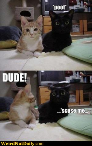 Weird But Funny Cat Videos