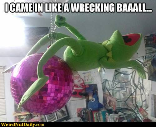 Funny Kermit The Frog: Funny Pictures @ WeirdNutDaily