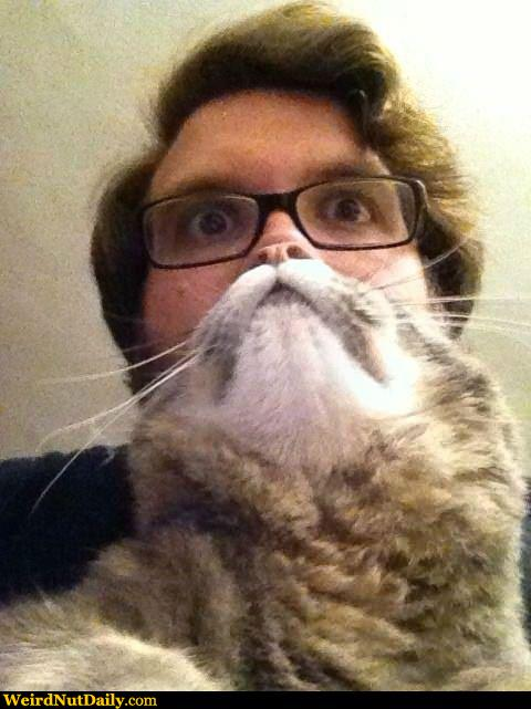 Man Face Cat