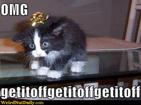 Funny Pictures @ WeirdNutDaily - Cat Torture, Christmas Edition