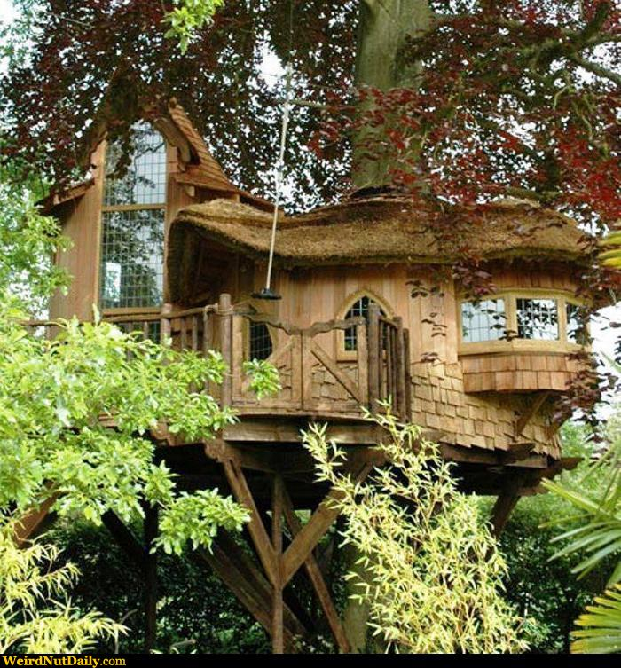 Funny pictures weirdnutdaily elf treehouse - Casitas del bosque ...