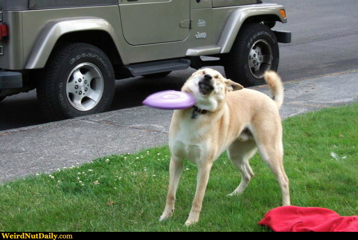 Dog Gets Hit By Frisbee