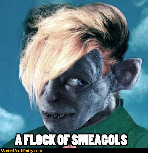 funny pictures weirdnutdaily   a flock of smeagols