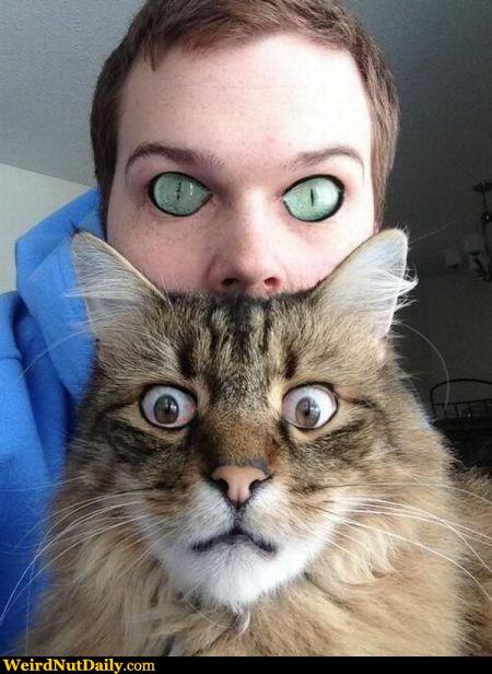 hemingway cat personality